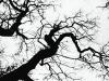 nature-morte-paysage-3